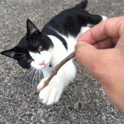 猫砂ペレットが人気な訳。